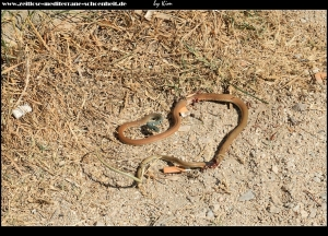 arme gefolterte Schlange :o((