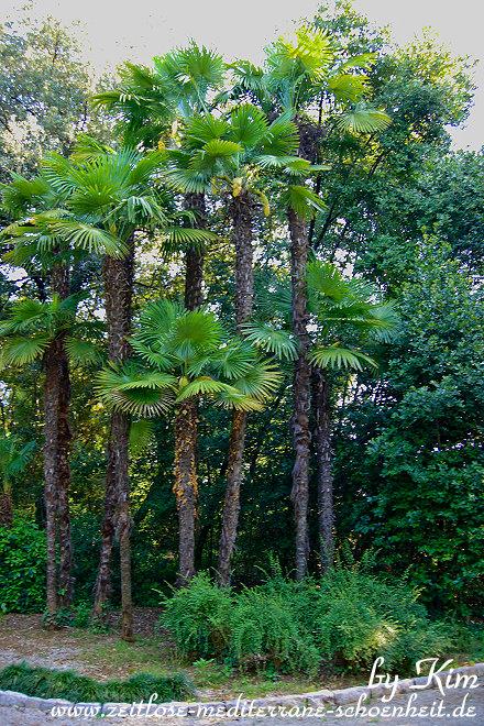Der Angiolina Park