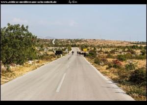 Zurück auf der Hauptverkehrsstraße mit Kuhbefall