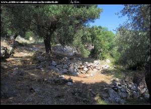 Wanderung durch die Olivenhaine