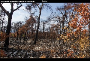Zwischen Štedrica und Imotica - verbrannte Wälder