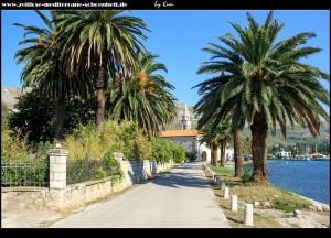 Palmenallee zum Kloster