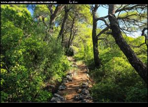 Wanderpfad durch den Pinienwald
