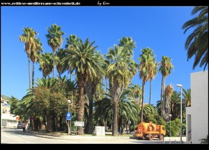 Der Palmenpark