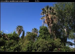 das Symbol Dalmatiens - Palmen in Hülle und Fülle
