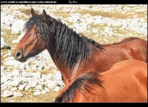 Pferde und die verlassene Ranch Podglogovik