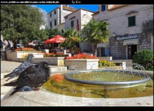 am Kačićev-Trg mit Springbrunnen und Tauben die sich erfrischen