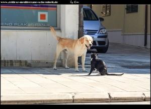 Hund & Katze streiten sich :o))